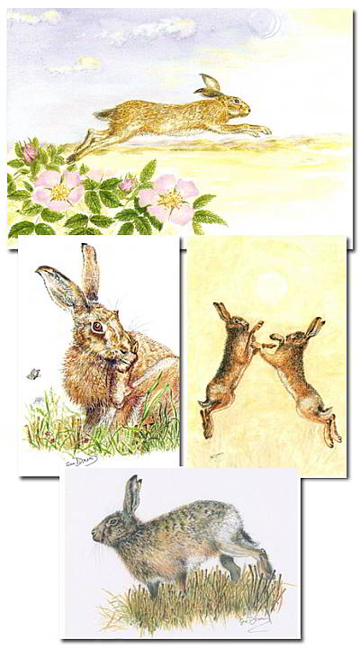 Set of 4 hare cards
