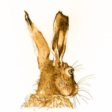 Brown Hare print by Chris Thorn